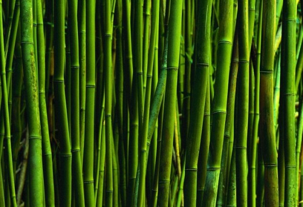 bambu-158343-700x478