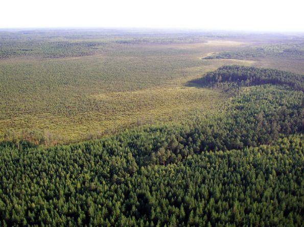 WWF Russia, petizione per la protezione delle foreste-w600-h600