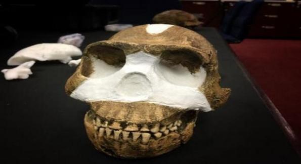cranio-appartenente-all-homo-naledi_419519