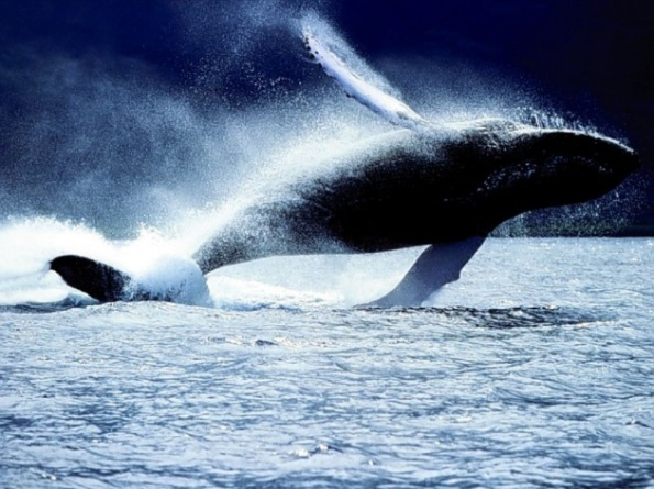 balena-630x360